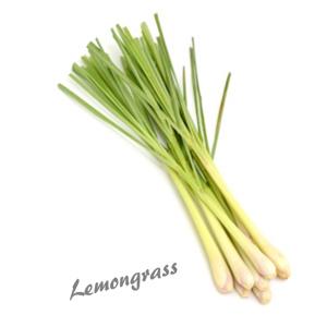 Lemongrass herb benefit