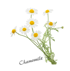 chamomile herb benefit