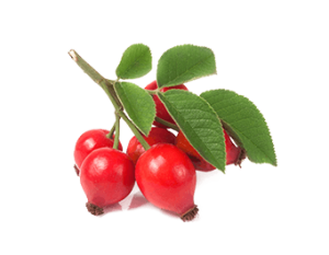 fruit-rosehip