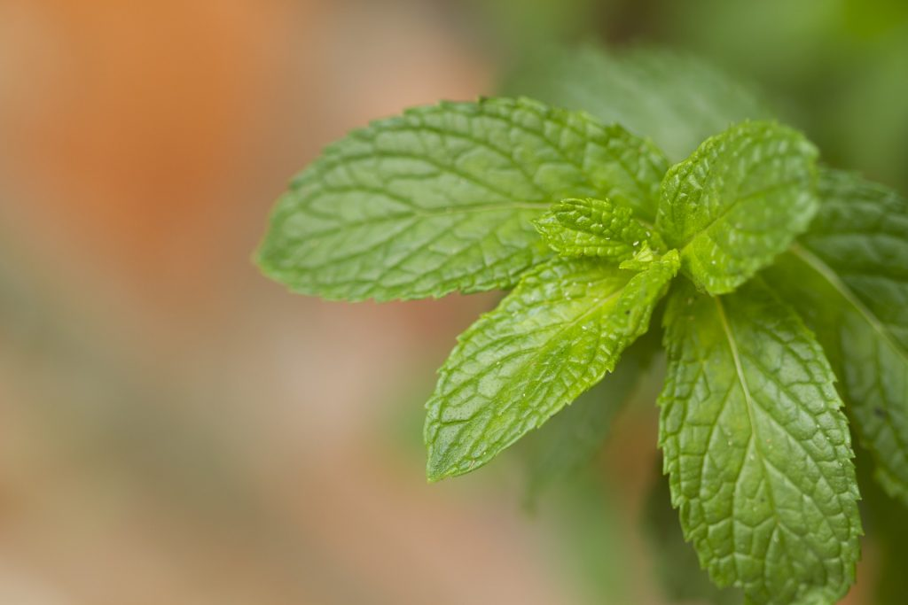 10 Amazing Benefits of Mint