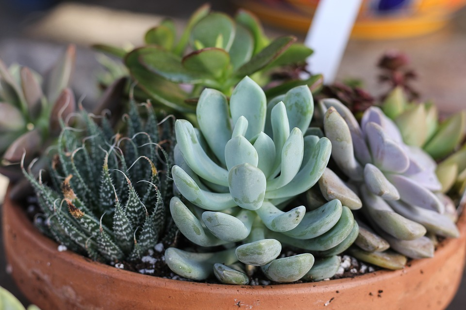 5 easy-care plants for the irresponsible