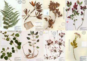 Google image result for herbarium